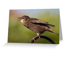Juvenile Starling Greeting Card