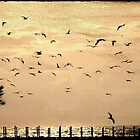 the flock by Ingz