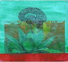 cerebral agave Photographic Print