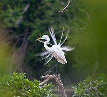 Egret by WiredMarys