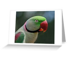 Alexandrine Parrot Greeting Card