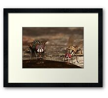 2 flys are better than 1 Framed Print