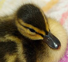 Sture The Mallard #2 by MarianaEwa