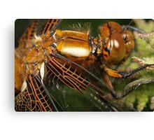 dragonfly 1x Canvas Print
