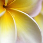 there's something about plumerias... by Iris Mackenzie