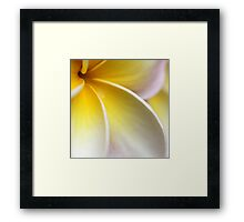there's something about plumerias... Framed Print