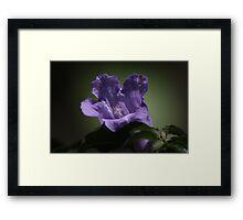 Purple flower 5586 Framed Print