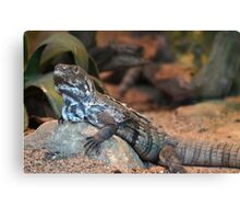 A Scaled Reptile Canvas Print