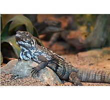 A Scaled Reptile Photographic Print