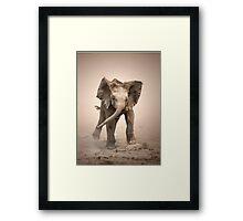 Elephant Calf mock charging Framed Print