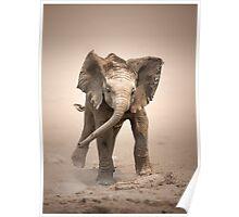 Elephant Calf mock charging Poster