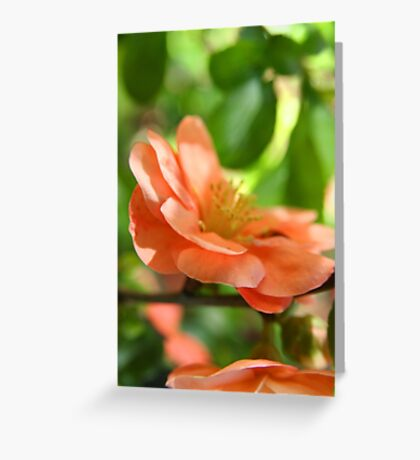 Peach-colored blossom - 2010 Greeting Card