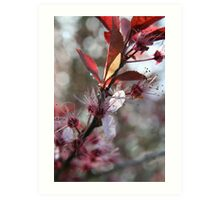 Blossoms on a branch - 2011 Art Print