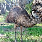 Emu Mambray Creek, S.A. by elphonline