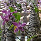 Hawaiian Orchids by jtalia