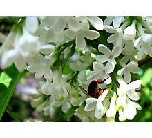 Busy busy busy Bee Photographic Print