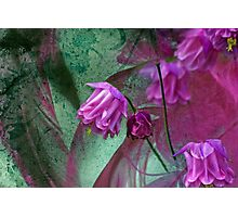 Pink Mystery Photographic Print