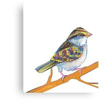 White-throated sparrow on blank background Canvas Print