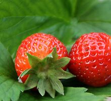 Strawberries in the garden by vvfineartphotog