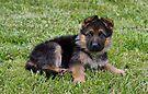 Sweet Puppy by Sandy Keeton