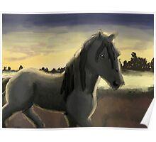 Morning Stallion Poster