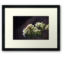 Bee On Oregano Framed Print