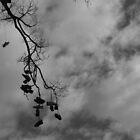 Shoe Tree - Edinburgh Gardens by BreeDanielle