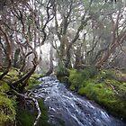 Myrtle Forest by Mike Calder