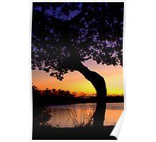 Currumbin Silhouette - dawn Poster