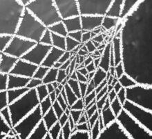 Spider Lace 4 Sticker