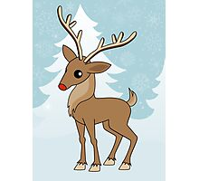 Christmas Reindeer Photographic Print