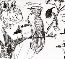Bird Sketches by boceto