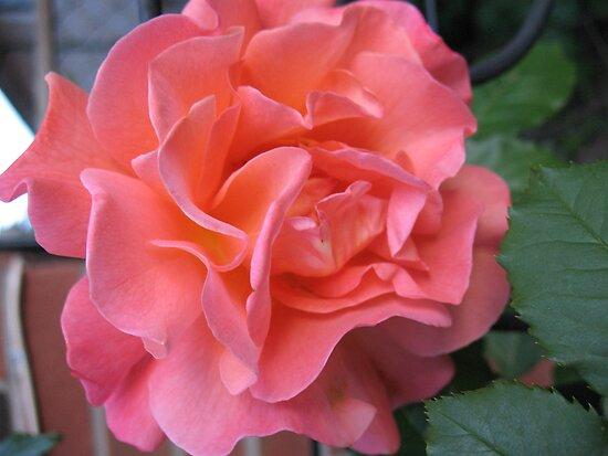 West Side Story Rose - Little Maria by MarianBendeth
