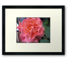 West Side Story Rose - Little Maria Framed Print