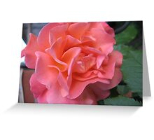 West Side Story Rose - Little Maria Greeting Card