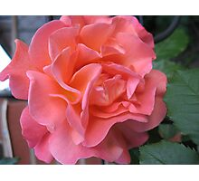 West Side Story Rose - Little Maria Photographic Print