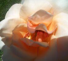 Creamy Peachy Delight by BingoStar