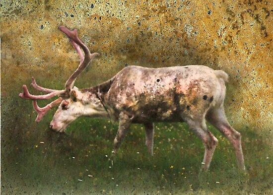 A Reindeer Named Bimbo by Kay Kempton Raade