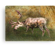 A Reindeer Named Bimbo Canvas Print