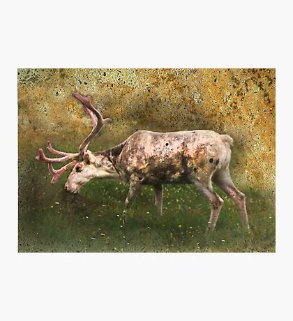 A Reindeer Named Bimbo Photographic Print