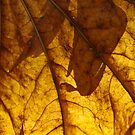 Autumn Leaf by Peter Rowley