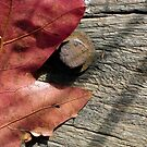 Autumn Leaf;Bolted Down ! by Peter Rowley