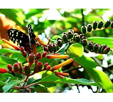 Nature's Wings Photographic Print
