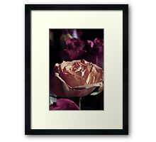Grungy Rose Framed Print