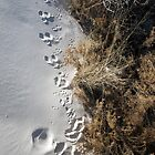 Footprints by Eric Seale