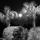 Moon and Palmettos  by WalterHolland