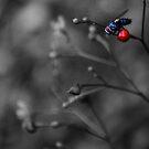 fly iii by gary roberts