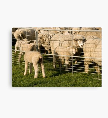 Lamb searches for Mum Canvas Print