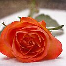 A rose for you by Sangeeta