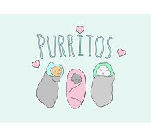 purritos, cute little kittens Photographic Print